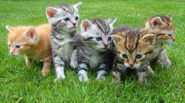pět koťat v trávě