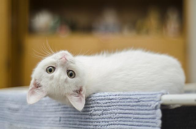 bílé kotě na schodech