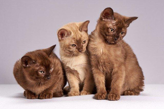 roztomilý kočky
