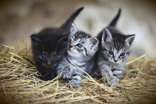 koťata na seně