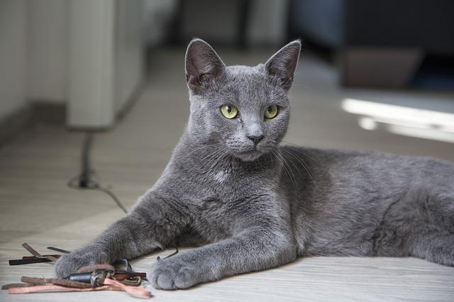 krásná kočka s hračkou