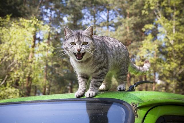 naštvaná kočka