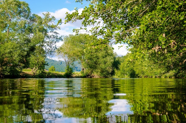 Záběr na řeku protékající lesem