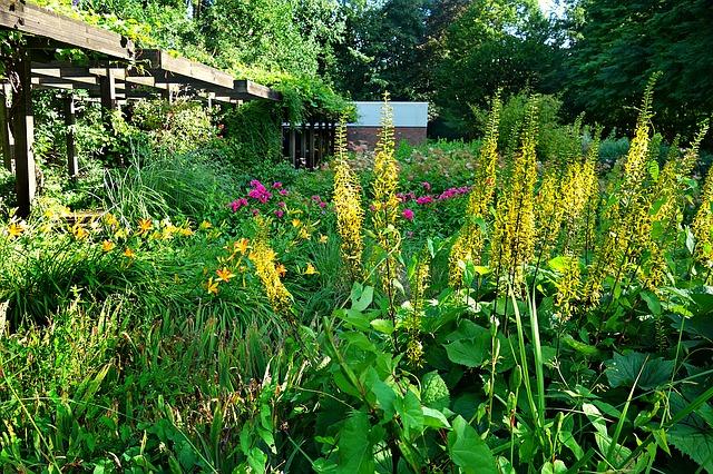 zahradní rá